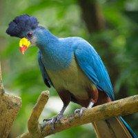 Chiêm ngưỡng loài chim chỉ có ở châu Phi