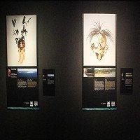 Chiêm ngưỡng mặt nạ thổ dân hơn 60.000 năm tuổi tại Hà Nội