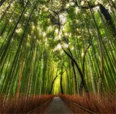 Chiêm ngưỡng vẻ đẹp của những khu rừng độc lạ trên thế giới