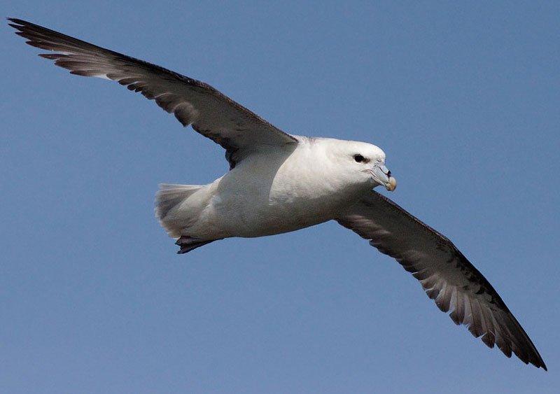 Chim bay nhanh hơn do biến đổi khí hậu