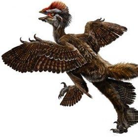 Chim cổ đại từng có bốn cánh