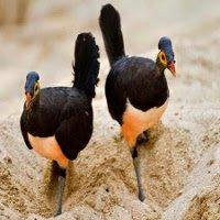 Chim được sở hữu bãi biển