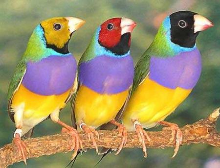 Chim sẻ có thể chọn giới tính cho con