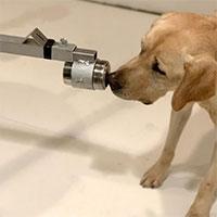 """Chó có thể nhận biết """"mùi"""