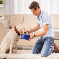 Cho cún cưng ăn đồ tươi sống có thể khiến... chủ nhân bị bệnh