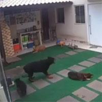 """Chó cưng chết đầy bí ẩn trong vườn, chủ xem camera thì hãi hùng trước """"sát thủ"""" to bằng đầu ngón tay"""
