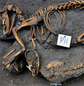 Chó được chôn tập thể ở Mexico