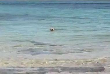 Chó nhà cắn cá mập