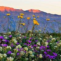 Choáng ngợp trước hiện tượng hoa