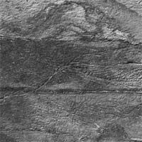 Choáng váng đàn quái vật 570 triệu tuổi không nội tạng,