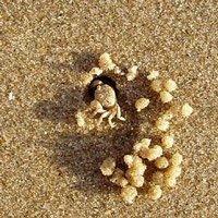 Chóng mặt xem dã tràng vê cát xây nhà