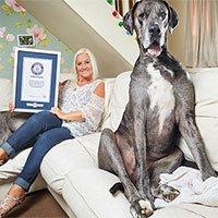 Chú chó cao nhất thế giới qua đời: Chiều cao tương đương với những siêu sao bóng rổ