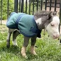 Chú ngựa nhỏ nhất thế giới chỉ nặng khoảng... 8,6 kg