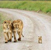 Chùm ảnh: Tình mẫu tử trong vương quốc động vật