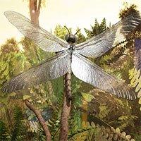 Chuồn chuồn khổng lồ và những sự thật về thế giới tiền sử mà bạn nên biết