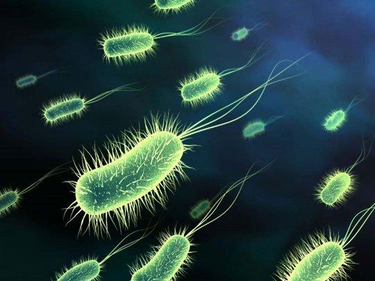 Chụp được ảnh của siêu vi khuẩn Ecoli kháng thuốc