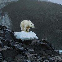 Chuyện gì xảy ra nếu Trái đất tiếp tục nóng lên?