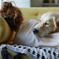 Chuyên gia trị liệu Mỹ hướng dẫn cách cải thiện giấc ngủ, củng cố sức khỏe cảm xúc