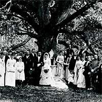 Chuyện về cây sồi cổ thụ