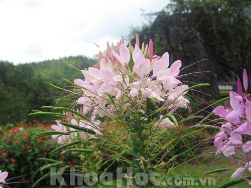 Có bao nhiêu loài thực vật có hoa?