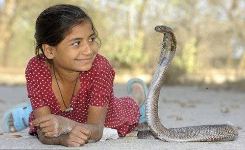 Cô bé 8 tuổi chỉ thích chơi... rắn độc