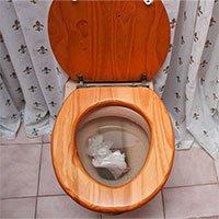 Có nên vứt giấy vệ sinh vào bồn cầu?