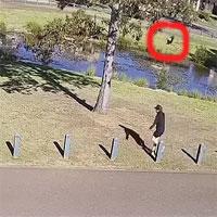 Con chim hung dữ đuổi theo