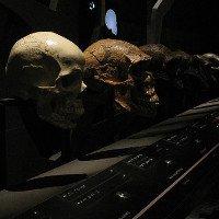 Con người không thể dự đoán được sự tiến hóa của chính mình