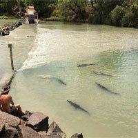 Con sông tử thần nơi cá sấu lúc nhúc rình đoạt mạng người