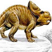 Công cụ đặc biệt của loài khủng long Protoceratops dùng để tán tỉnh bạn tình