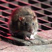 Covid-19 sẽ khiến loài động vật đáng sợ này