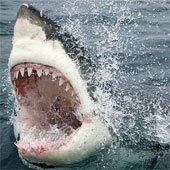 Cưa điện làm từ răng cá mập: Cỗ máy