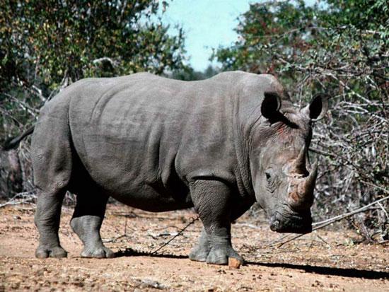 Cuộc chiến bảo vệ tê giác
