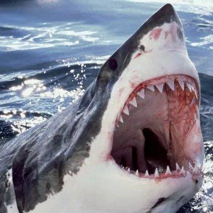 """Cuộc đua """"xem răng ai khỏe nhất"""" trong vương quốc động vật"""