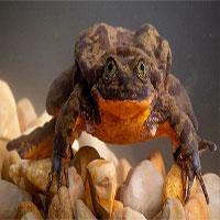 Cuối cùng thì chú ếch cô đơn nhất thế giới đã tìm được