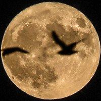 Cuối tuần này, chúng ta sẽ được chiêm ngưỡng siêu trăng