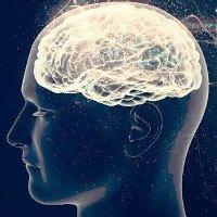 Đã lý giải được tại sao não lại sử dụng quá nhiều năng lượng?