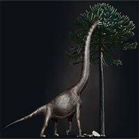 Đã nhận diện được bàn chân khủng long lớn nhất thế giới
