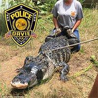 Đại dịch cá sấu hoành hành nước Mỹ