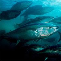 Đại dương cạn kiệt oxy ở mức kỷ lục, báo động hàng loạt