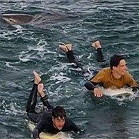 Đấm cá mập bằng tay không, chàng trai thoát chết thần kỳ