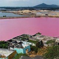 Đầm nước ở Bà Rịa - Vũng Tàu chuyển màu hồng tím và sự thật phía sau