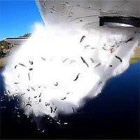 Đàn cá hồi hàng nghìn con được máy bay đổ xuống hồ