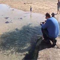 Đàn cá thu hàng trăm con kẹt trên bãi biển sau thủy triều