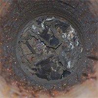 Đàn kiến triệu con ăn thịt đồng loại để sống sót trong boongke