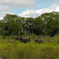 Đang uống nước chú voi bỗng dưng la hét ầm ĩ, nhìn kỹ ai cũng hãi hùng với con