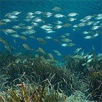 Đánh bắt hải sản công nghiệp làm gia tăng lượng khí CO2