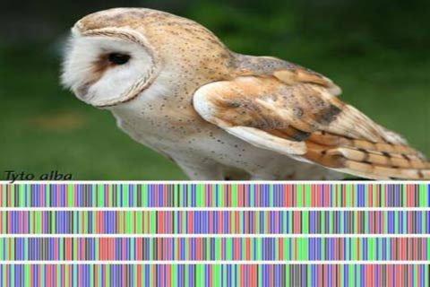 Đánh dấu mã vạch DNA trên sinh vật