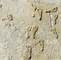 Dấu chân người cổ đại Bắc Mỹ được tìm thấy ở tiểu bang New Mexico
