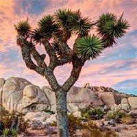 Đây là lý do loài cây này mọc siêu chậm: Cả năm mọc được 3cm